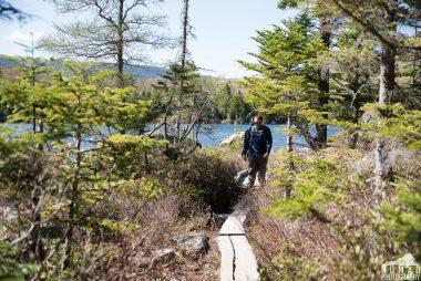 Hiking boardwalk